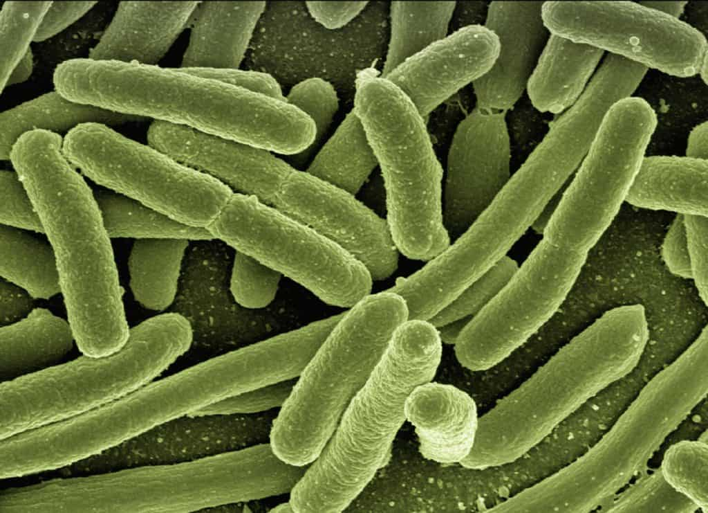 Biohazards in the Home bacteria