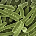 Biohazards in the Home bacteria